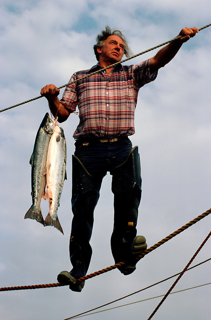 Commercial Netsman removes an Atlantic Salmon from a Stake Net. St Cyrus Bay. Scotland