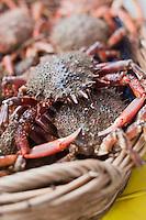Europe/France/Bretagne/56/Morbihan/ Belle-Ile-en-Mer/Le Palais: Araignées de mer sur le marché