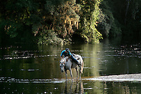 A rider from the Sheriff's Boys Ranch cools his horse in the Suwannee River. The Ranch has assisted troubled youth since the 1950's. Farming, forestry, mechanics, and other useful <br />