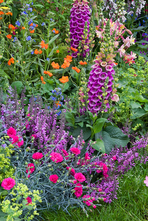 Perennial flower garden colorful plant flower stock for Outdoor plants and flowers