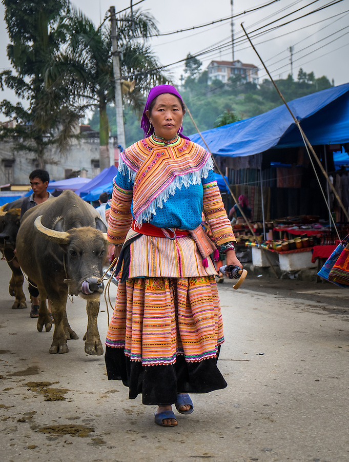 BAC HA, VIETNAM - CIRCA SEPTEMBER 2014:  Hmong woman driving buffalo at the  Bac Ha sunday market, the biggest minority people market in Northern Vietnam