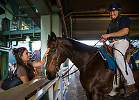ARCADIA, CA - MARCH 11: A fan pets an outrider horse at Santa Anita Park on March 11, 2017 in Arcadia, California. (Photo by Alex Evers/Eclipse Sportswire/Getty Images)