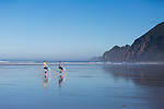 "Neahkahnie Beach in Manzanita, Oregon, a small beach town located in Tillamook County on the Northern Oregon coast.  Manzanita means ""little apple"" in Spanish.  Neahkahnie Mountain is located at the north end of the 7 mile long beach. Friends riding bikes along the sand on the beach"