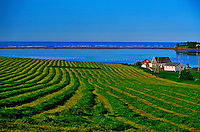 Farm near Cymbria, Prince Edward Island, Canada