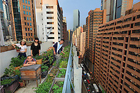 In Wan Chai, Hong Kong, on the roof top of the Art galery and library ACO, Michael Lueung keep a hive of chineses bees///Hong-Kong, à Wan Chai, la galerie d'Art et libraire ACO accueille une ruche d'abeilles chinoises de l'apiculteur Michael Leung.