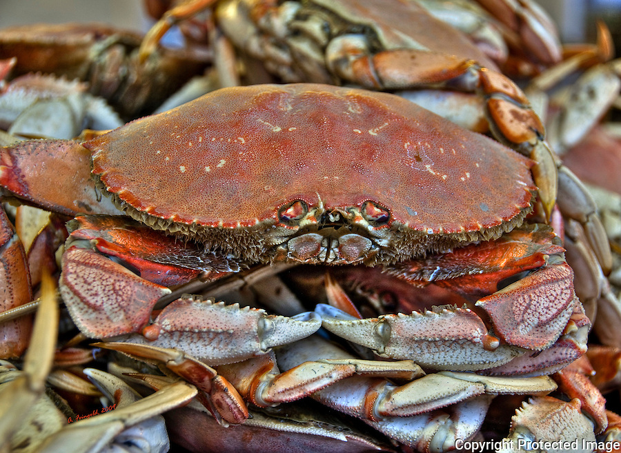 Dungeness Crab, HDR, San Francisco, Fisherman's Wharf<br /> <br /> CLICK ON ADD TO CART ABOVE TO SEE AVAILABLE STYLES, SIZES AND PRICES