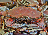 Dungeness Crab, HDR, San Francisco, Fisherman's Wharf<br />