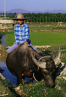 December 6th 1993-PHI LA, NORTHERN VIETNAM-A young boy rides a buffalo in rice paddies in Northern Vietnam&Otilde;s Phi La.  Photo by Daniel J. Groshong/Tayo Photo Group