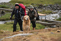 Dog and wet hikers approach Sälka hut, Kungsleden trail, Lapland, Sweden