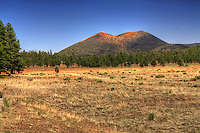 Sunset Crater behind the pines