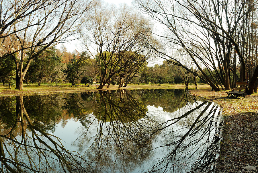 A stunning and dramatic view of the water reflection along this river. The water is quiet and calm, while the uniqueness of these trees stands out strong in this picture.