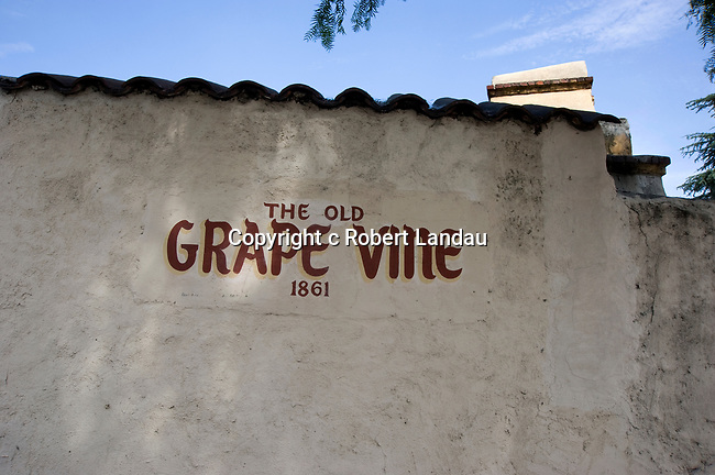 The Old Grape Vine at the mission district of San Gabriel, California