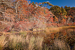 Oak reflections in Cliff Pond at Nickerson State Park, Brewster, Cape Cod, MA, USA
