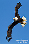 A photo of a bald eagle soaring in the sky.