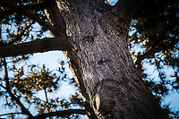 With imagination, the knots in this tree and curve in its bark resemble a face, with a frowning mouth.