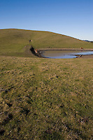 Cattle Pond, East Bay Hills, Moraga, California
