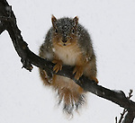 A squirrel braves out the oncoming snow on a branch in Elmwood Park.