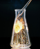 STEEL WOOL BURNING IN OXYGEN<br /> Placed in Flask of O2 with Tongs<br /> Combustion is more rapid in the presence of pure oxygen.