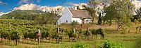 Wine cellar in the Balaton hills  vineyards , Balaton, Hungary