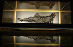 Foto: VidiPhoto..ARHUS - Veenlijk in het museum in Moesgard, bij Arhus in Denemarken