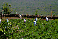 Farm workers in upcountry Maui.