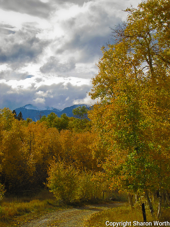 A campground road turns right and disappears into the fall colors at Lundy Lake.