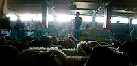 People look at the sheep waiting to be slaughtered at a temporary slaughterhouse set up in an hanger in Pantin, outside Paris, France, during the ritual sheep slaughter held for the Muslim celebration of Aid-el-Kebir, 1 February 2004. Photo Credit: David Brabyn.