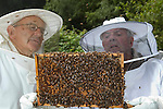Inspecting a comb. .Bee keeping course at Monkton Wylde, Dorset.  Course leader is David Wiscombe.