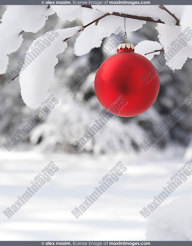 Red Christmas ornament outdoors on a snow covered tree branch winter nature scenic artistic holiday background