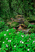 731400021 wildflowers fringe a tropical rain forest stream and jungle on the island of saint lucia in the caribbean