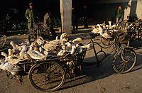 Asie/Chine/Jiangsu/Env Nankin&nbsp;: March&eacute; libre de la rue Shan-Xi - March&eacute; aux oiseaux et aux canards de tradition s&eacute;culaire<br /> PHOTO D'ARCHIVES // ARCHIVAL IMAGES<br /> CHINE 1990