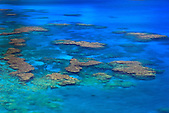 Corail dans le lagon de Lifou, Nouvelle-Calédonie