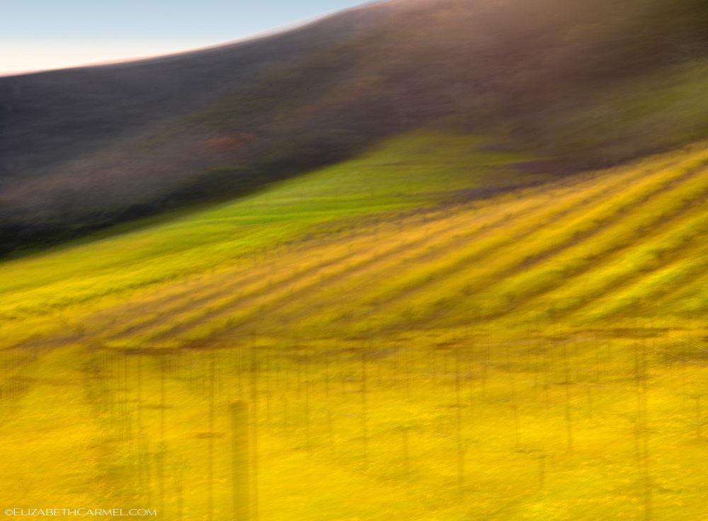 Wine Country Spring I