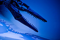 Stock photo of a Tylosaurus head detail at the new Paleontology Hall at the Houston Museum of Natural Science