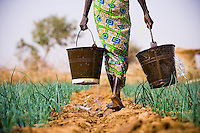 Subsistence farmer Habibou Kiendrebeogo walks across her small plot of land carrying water for her onion field.  She works on the land everyday and sells the produce at the local market to help support her five children.  <br />