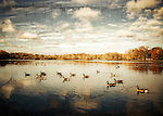 Antiqued version of geese on Belmont Lake State Park on a beautiful November Day
