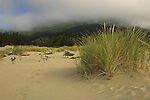 Sand dunes and grasses at Bob Straub Wayside Park in Oregon