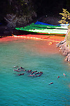 "A pod of what appear to be pilot whale dolphins swim in a sealed off area known as ""killer cove"" just after the first dolphin cull of the season has taken place in Taiji,  a small fishing village in central western Japan on 10 September  2009. Floating upside-down at top right of the picture, where the rocky cliff meets the water and the yellow inflatable floats, is the discarded body of a baby bottle nose dolphin..Photographer: Robert Gilhooly"