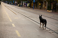 Dog and Vitosha Boulevard, Sofia, Bulgaria