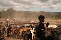 Brabaig girl herding Cattle, Tanzania.
