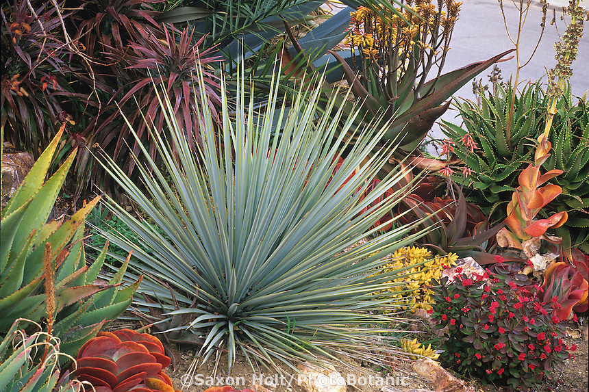 Garden Design: Garden Design with Indoor And Outdoor Succulent ... - how to design a succulent garden