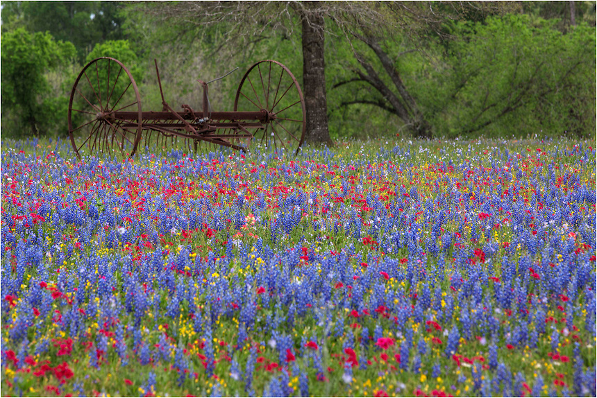 Just outside of Luling, Texas, I spotted this old wagon in a field of colorful bluebonnets, phlox, and other beautiful colors. Using a telephoto lens, I zoomed in on the wagon and tried to highlight the explosion of Texas wildflower growing here in the spring of 2014.