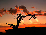 Storm clouds at sunset, Jeffrey Pine on Sentinel Dome, Yosemite National Park, California