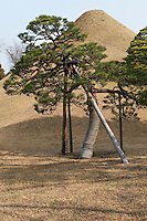 Traditional rope binding protects the trunks of the most valuable trees in the 17th century Suizen-ji garden