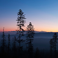 Dawn tree silhouette in Tatra foothills, Poland