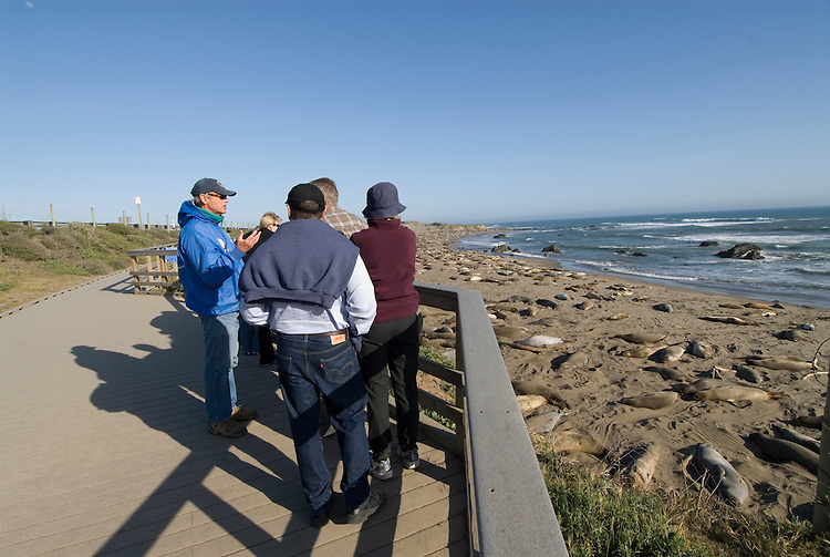 California, San Luis Obispo County:  Elephant Seals gather at Piedras Blancas beach.  Blue-jacketed docents of Friends of the Elephant Seals explain seals to visitors..Photo caluis193-70991..Photo copyright Lee Foster, www.fostertravel.com, 510-549-2202, lee@fostertravel.com