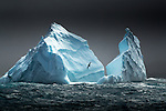 South Georgia Island, Bird Island region , albatross and icebergs <br /> <br /> Explored the northern end of South Georgia around Bird Island as winds and sea swell began to highlight the remote and wild nature of South Georgia. Later we photographed beautiful icebergs carried north from currents from the Weddell Sea. These isolated icebergs provided dramatic backdrops to the Wandering &amp; Light Mantled Sooty Albatross. Late in the day, on the leeside of the island we took a zodiac tour where we photographed fur seals playing amongst the surf, as Gentoo penguins porpoised nearby, and Giant petrels took off from the water in front of us. The zodiac tour culminated with stunning views of this rugged coastline cloaked with kelp fields.