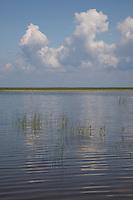 Lake Võrtsjärv near Vehendi, Tartu County, Estonia, Europe