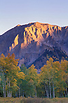 Morning alpenglow on Marcellina Mountain above autumn aspens, Gunnison National Forest, Colorado