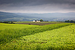 Potato fields in New Canada, Aroostook County, ME, USA